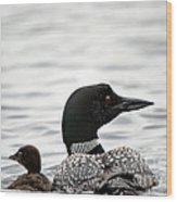 Common Loon And Baby Wood Print