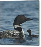 Common Loon Family Wood Print
