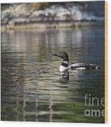 Common Loon On Northern Lake Wood Print