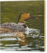 Common Loon Pictures 145 Wood Print