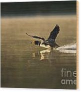 Common Loon Pictures 147 Wood Print