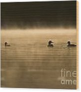 Common Loon Pictures 148 Wood Print