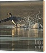 Common Loon Pictures 152 Wood Print