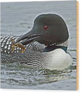 Common Loon With Food Wood Print