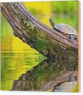 Common Map Turtle Wood Print