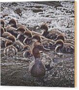 Common Merganser With Chicks Wood Print