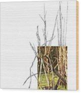 Common Moorhen Wood Print