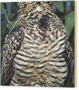 Common Nighthawk Napping Wood Print