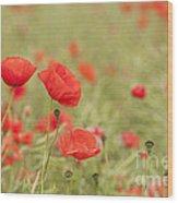 Common Poppies Wood Print