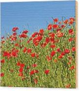 Common Poppy Flowers  Wood Print