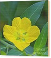Common Primrose Willow 1 Wood Print