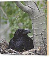 Common Raven Incubating Eggs In Nest Wood Print