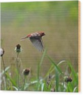 Common Redpoll In Flight Wood Print