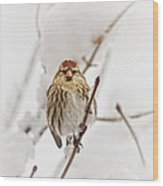 Common Redpoll Wood Print