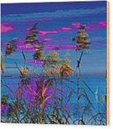 Common Reeds At Sunrise Wood Print