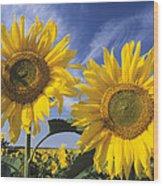 Common Sunflower Field Wood Print
