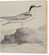 Common Tern, 19th Century Artwork Wood Print by Science Photo Library