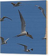 Common Terns Collage Wood Print