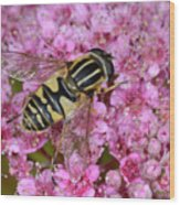 Common Tiger Hoverfly Wood Print