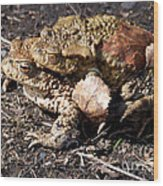 Common Toads Wood Print