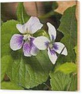 Common Violet Wood Print