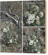 Common Yarrow Collage Wood Print
