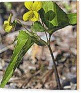 Common Yellow Violet Wood Print