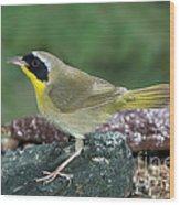 Common Yellowthroat Geothlypis Trichas Wood Print