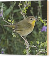 Common Yellowthroat Hen Wood Print