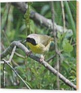 Common Yellowthroat Wood Print