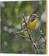 Common Yellowthroat Warbler Wood Print