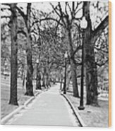 Commons Park Pathway Wood Print by Scott Pellegrin