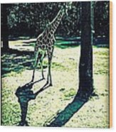 Comparing Shadows Wood Print