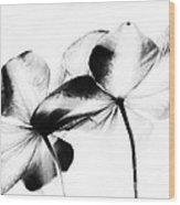 Petal Abstract Wood Print