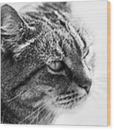 Concentrating Cat Wood Print