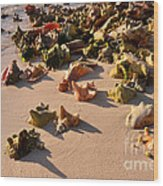 Conch Collection Wood Print