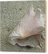Conch Wood Print
