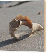 Conch On The Beach Wood Print