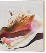 Conch Shell - Listen Wood Print