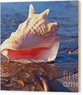 Conch Shell Wood Print