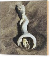 Conch Shell Spiral Wood Print