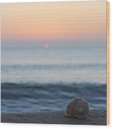 Conch Shell Sunrise Wood Print