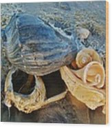 Conch Shells Hatteras 5 10/17 Wood Print