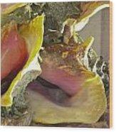 Conch Shells Wood Print