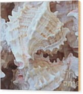 Conches Wood Print