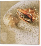 Conchs In Surf 1 Antique Wood Print