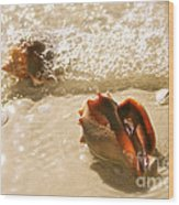 Conchs In Surf 2 Antique Wood Print