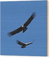 Condors In Convoy Wood Print