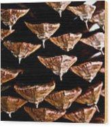 Cone Close Up Wood Print