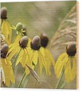 Cone Flower 8340 Wood Print